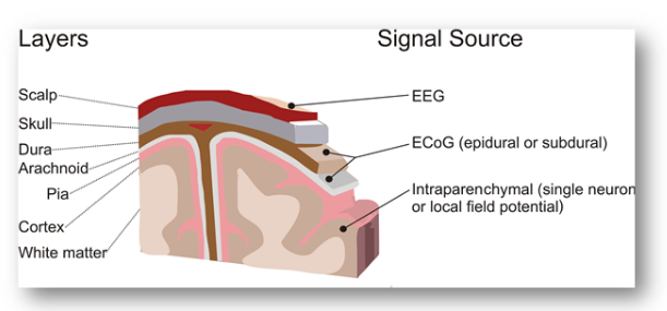 Layers of the Brain and Signal Source